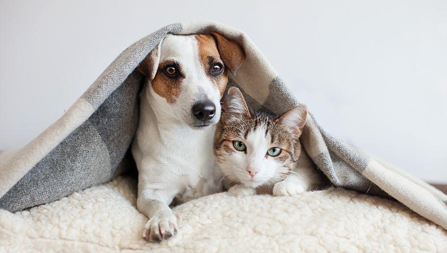 飼い主様と動物たちの心のケア
